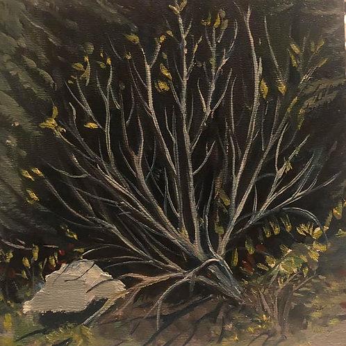 "Grey Brush, Ione, WA 6x6x2"" original oil painting, plein air"