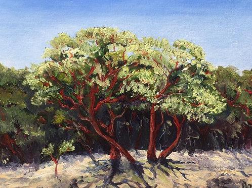 "Kings Ridge Manzanita 8x10"" original oil painting"