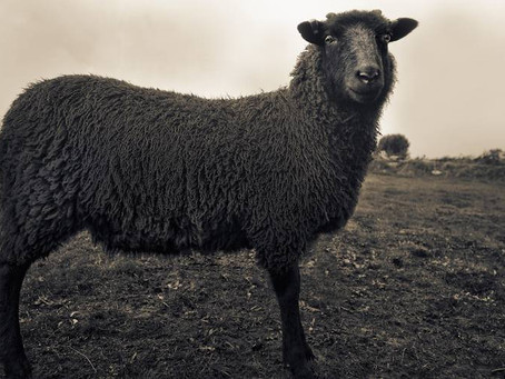 Coping with Covert Abuse and Black Sheep Syndrome