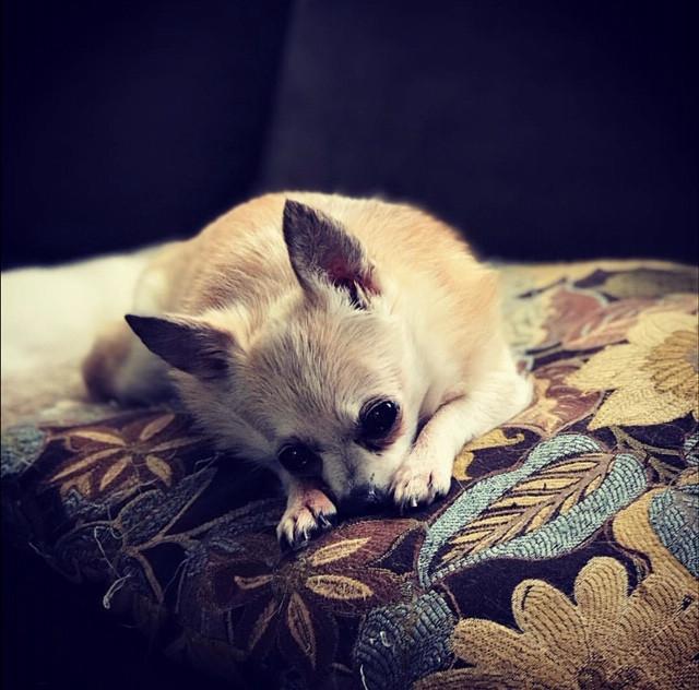 Senior Dog Rescue | Forever Dream Senior Dog Sanctuary | United States