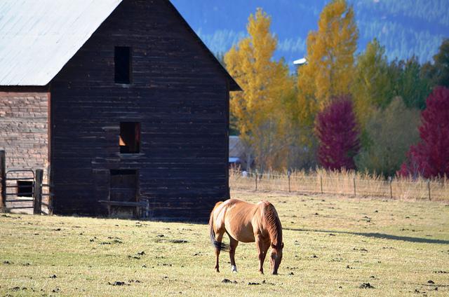 halfwayhorse