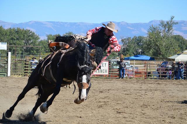 Panhandle Rodeo Bronc Buster