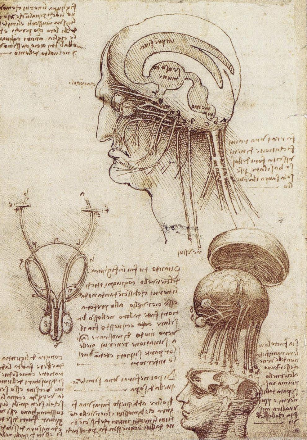 The Mechanical Man -Léonard de Vinci