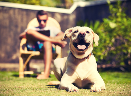 Spring is here-Are you ready to keep your pet safe?
