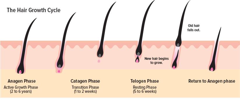 Image courtesy of hairsciencescenter.com