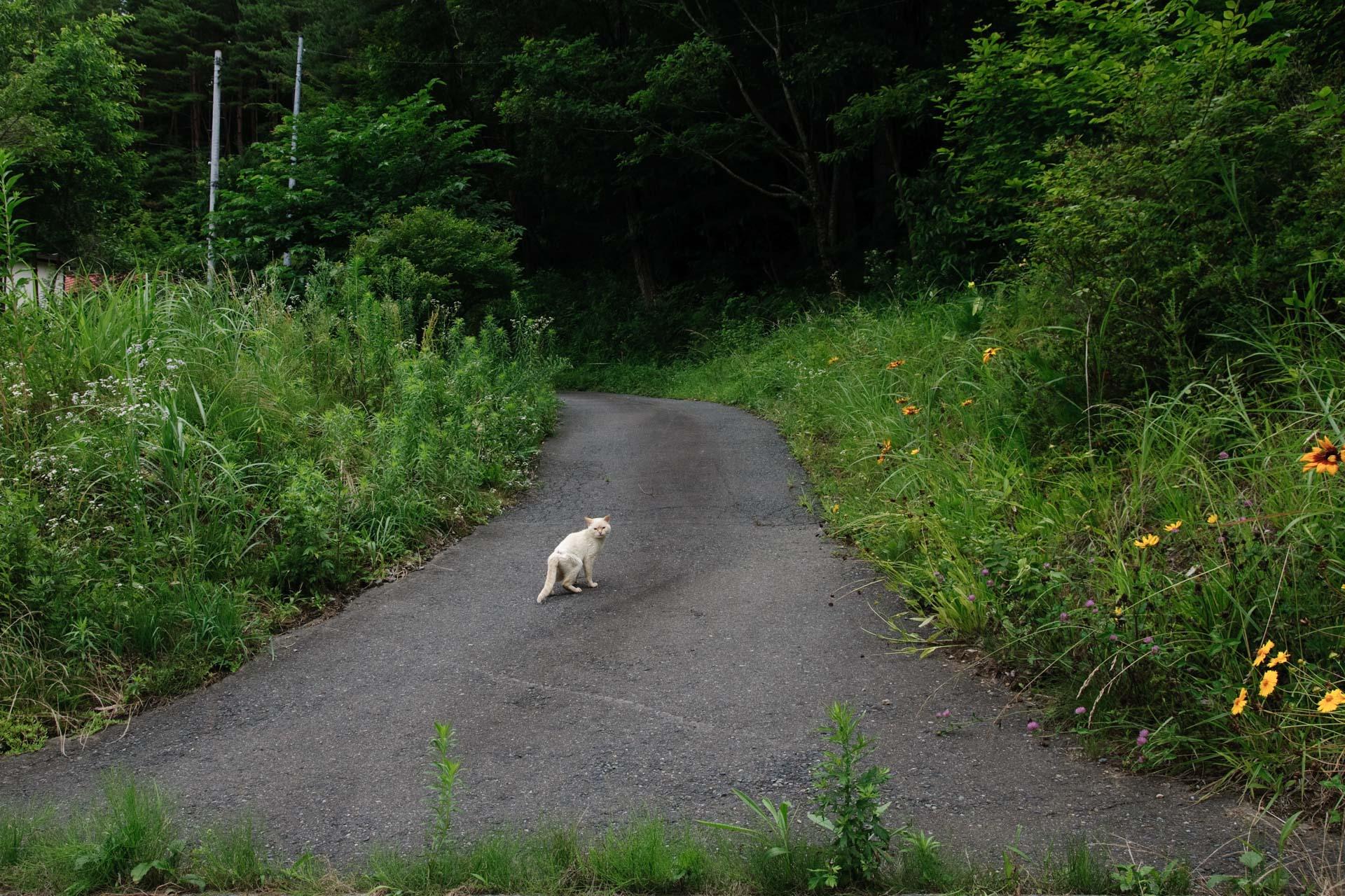 Cat in Tesitiro,Namie-machi