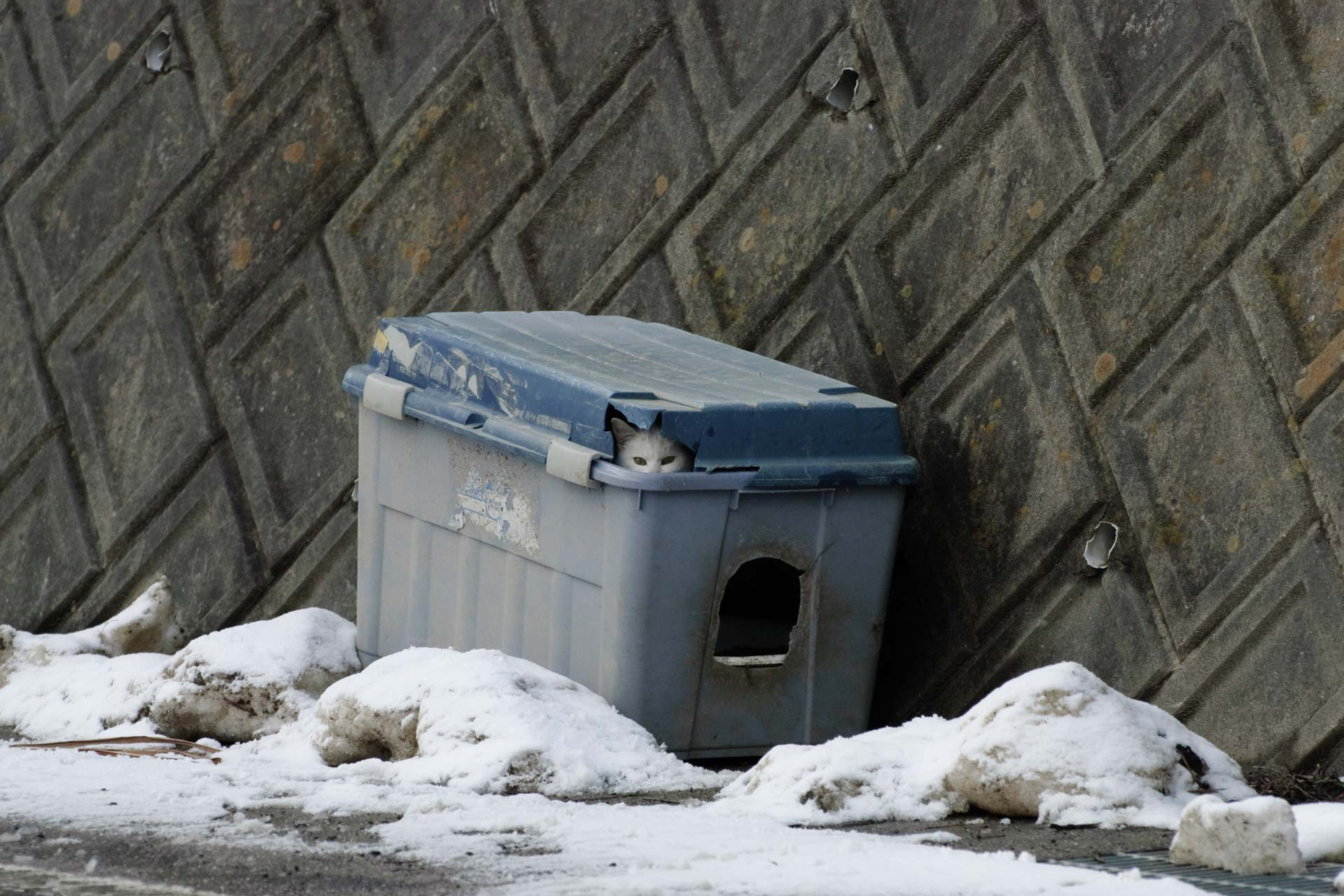 Cat in feeding box
