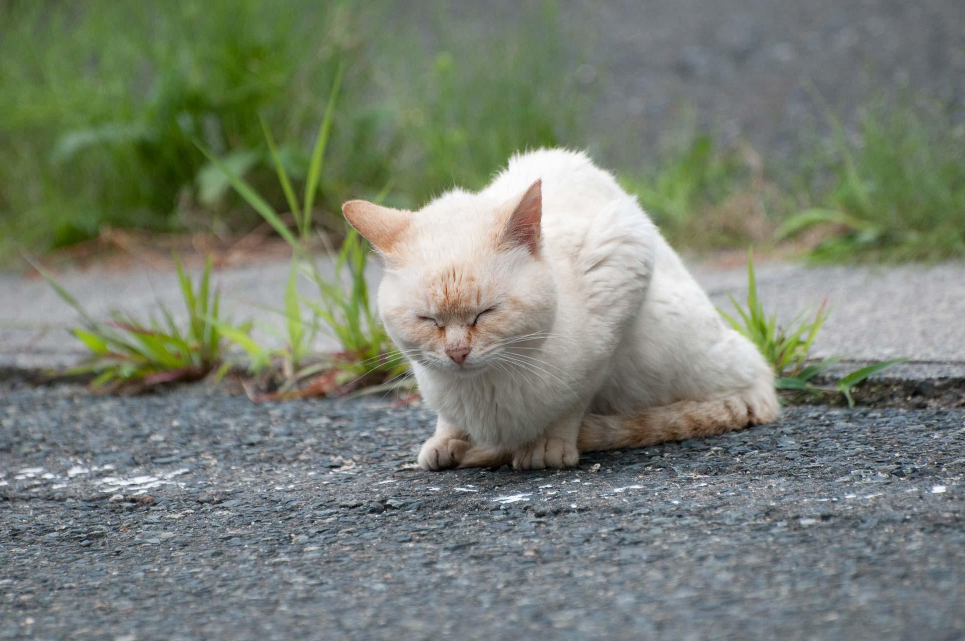 Sic cat
