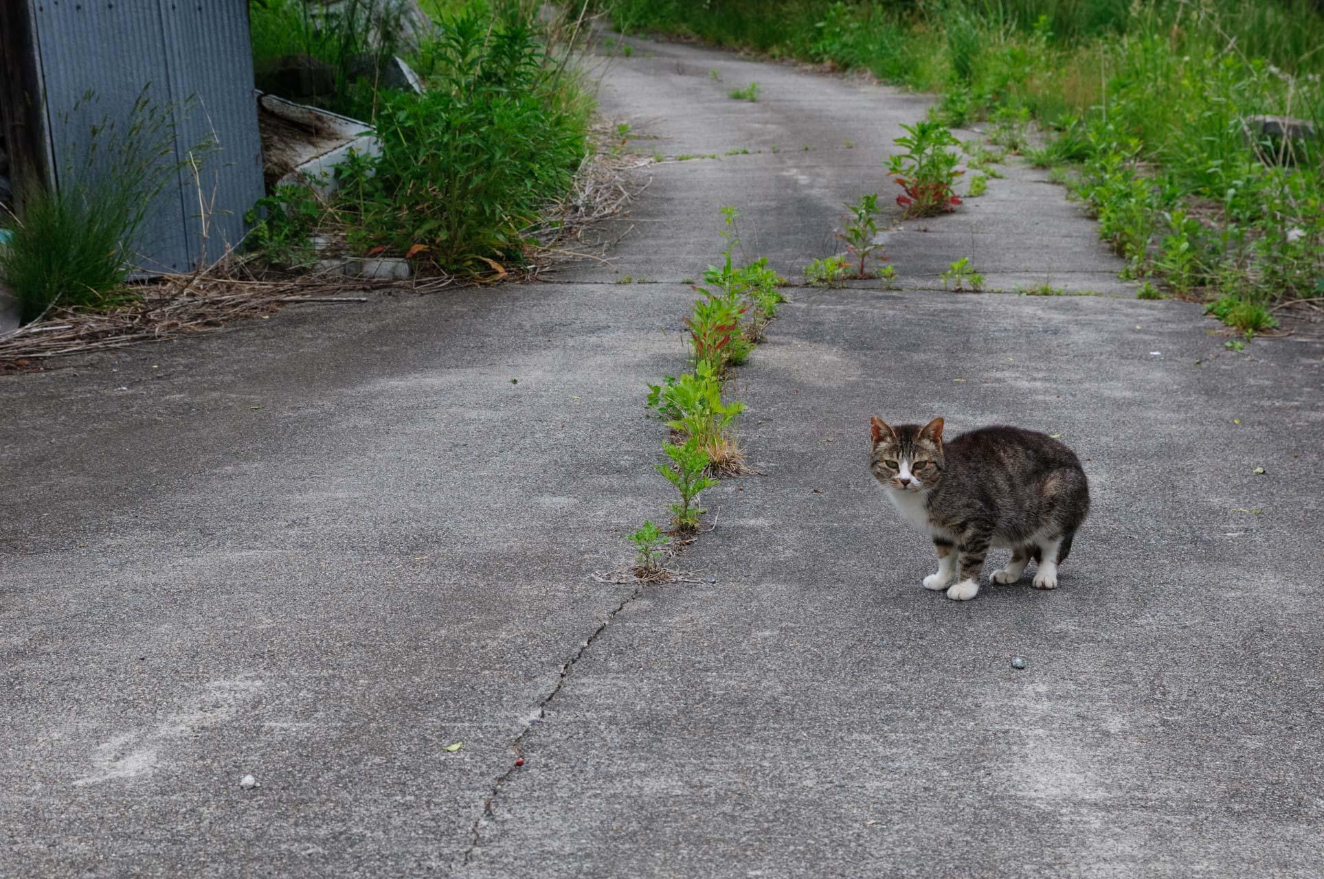 Cat in Nagadoro,Iitate
