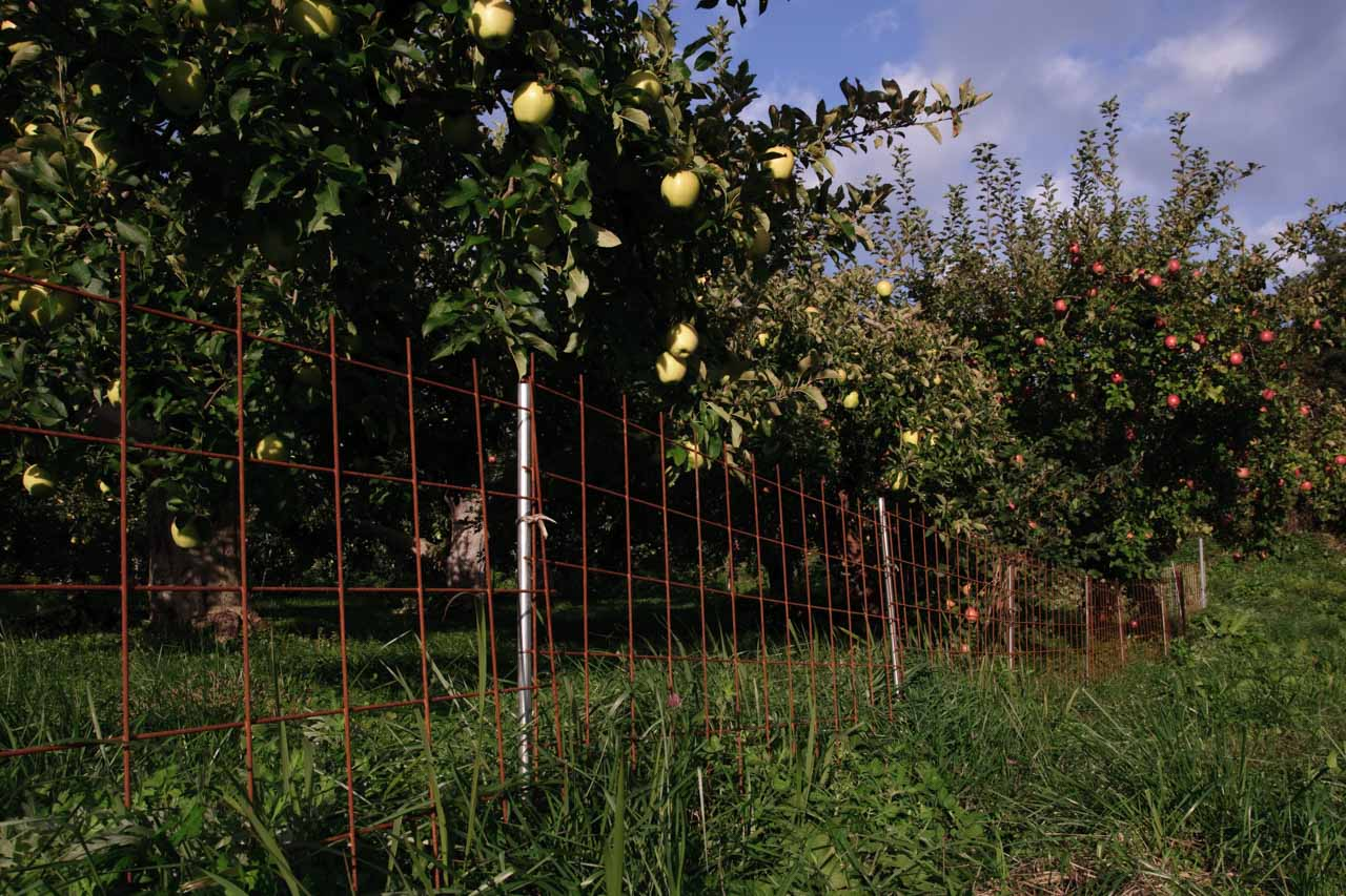 Protective fence of apple field
