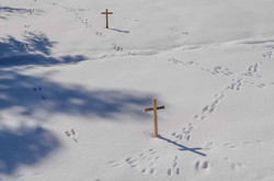 Footsteps of hare