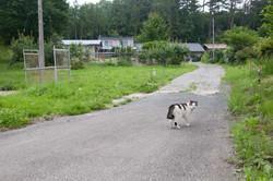 Cat in hiso