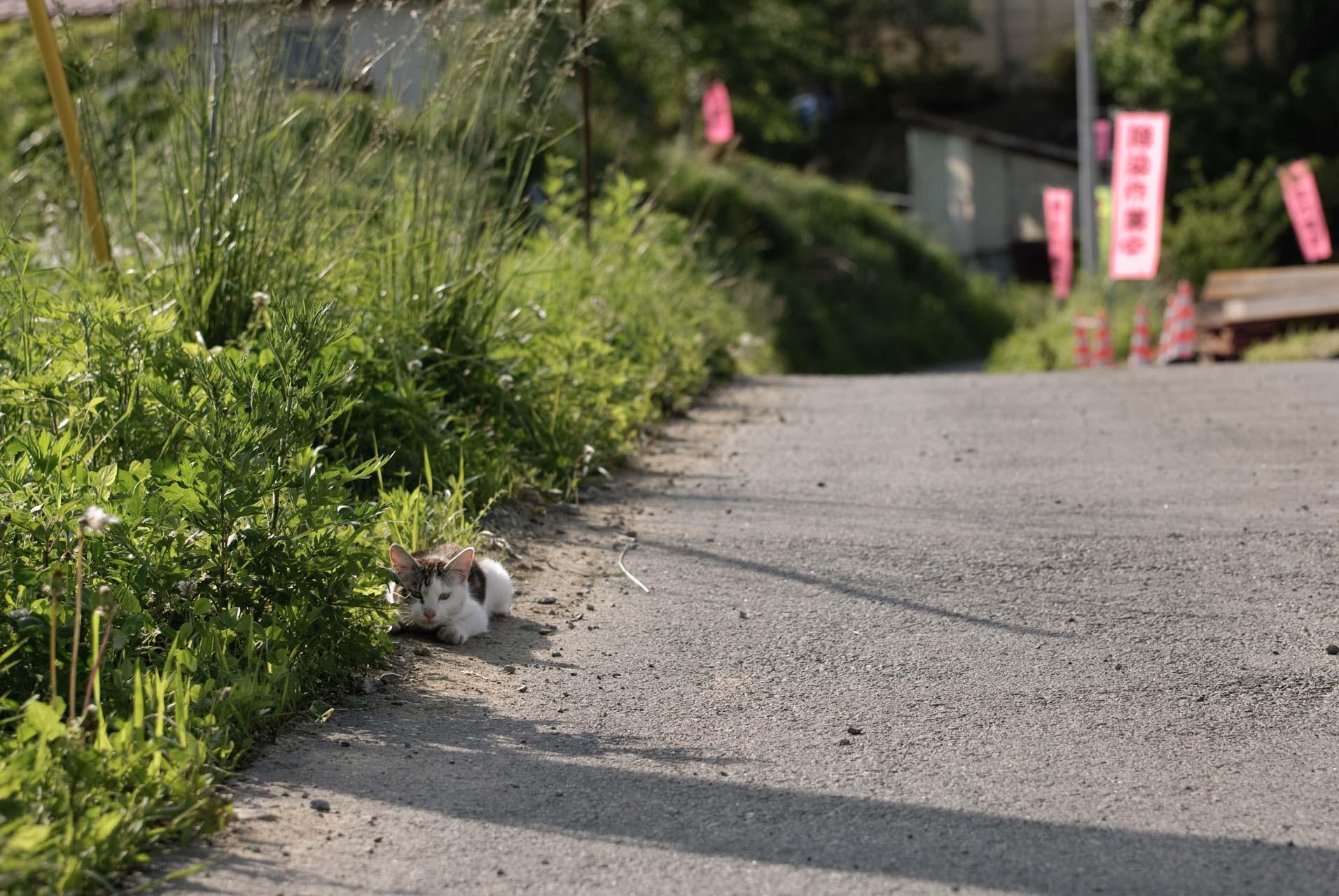 Cat in Yamakiya,Kawamata