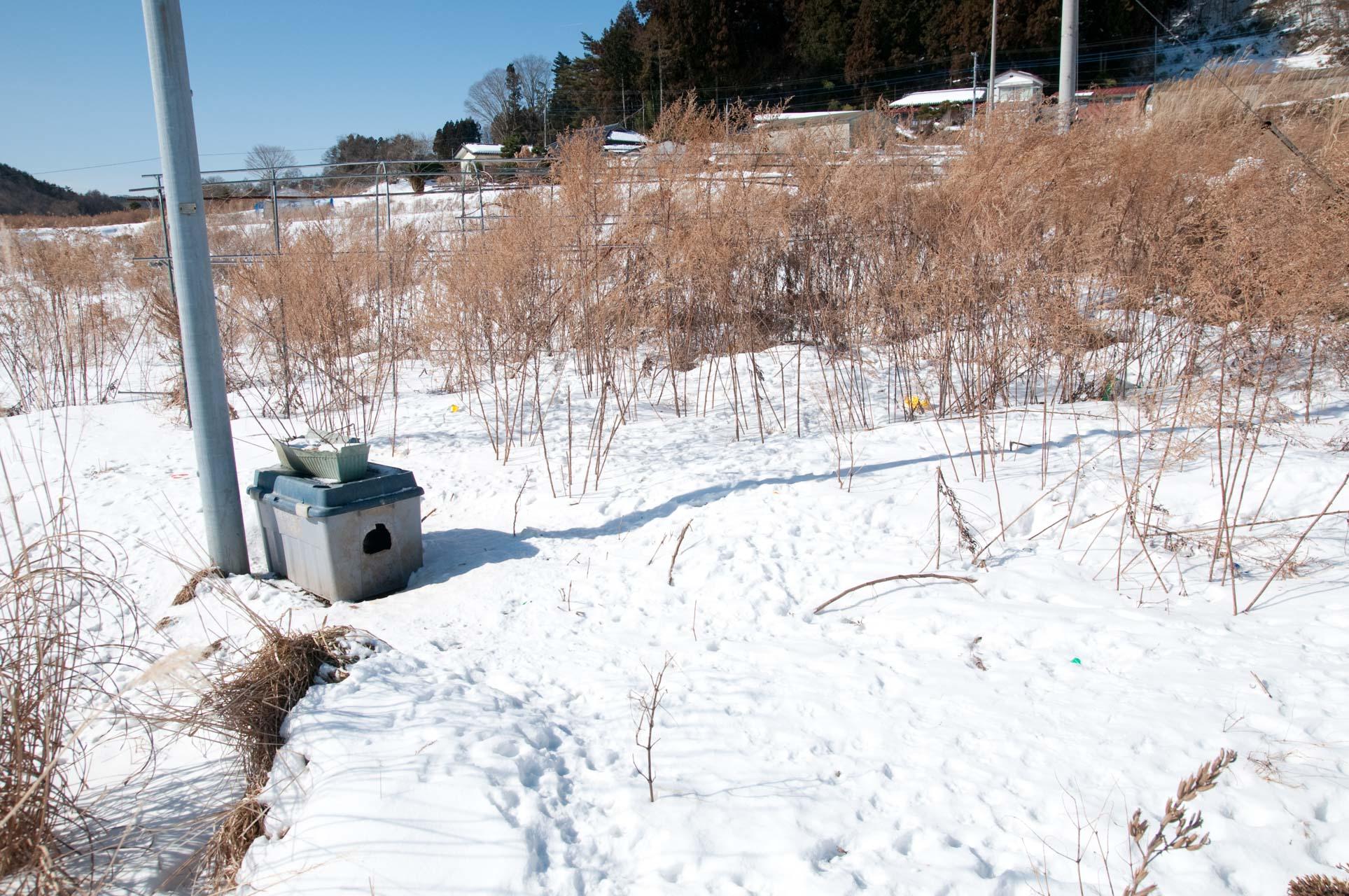 Feeding box in Yamakiya,kawamata
