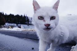 Cat in Nihonmatsu.