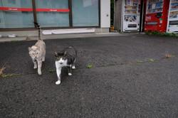Cats in Yamakiya,kawamata
