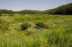 Breeding area of wildboar