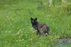 Cat in Hiso,Iitate