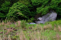 Wildboars in Nagadoro,Iitate-village
