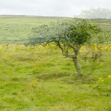 Neolitische nederzetting in Happy valley 02