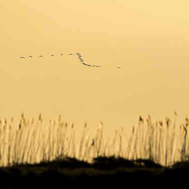 Ketelmeerdijk