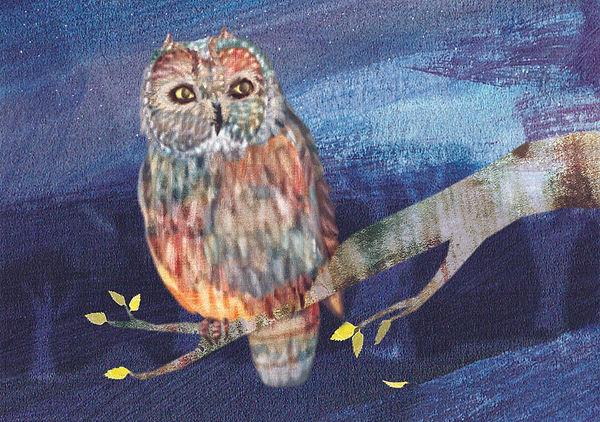 BirdsShortEaredOwlSmall.jpg