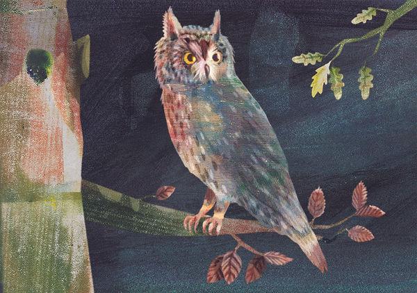 Long Eared Owl Small.jpg