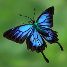 Encyclopedia_Image_BlueEmperor.png