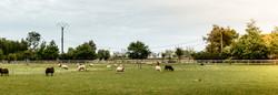 schapen hoevetoerisme