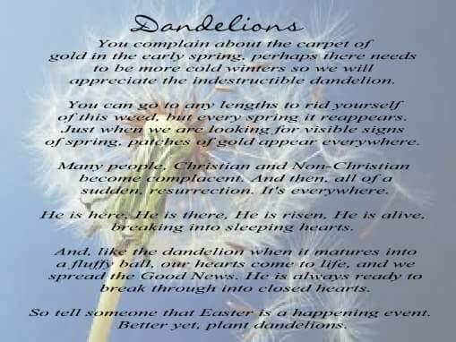 Grandma's Poem about Dandelions