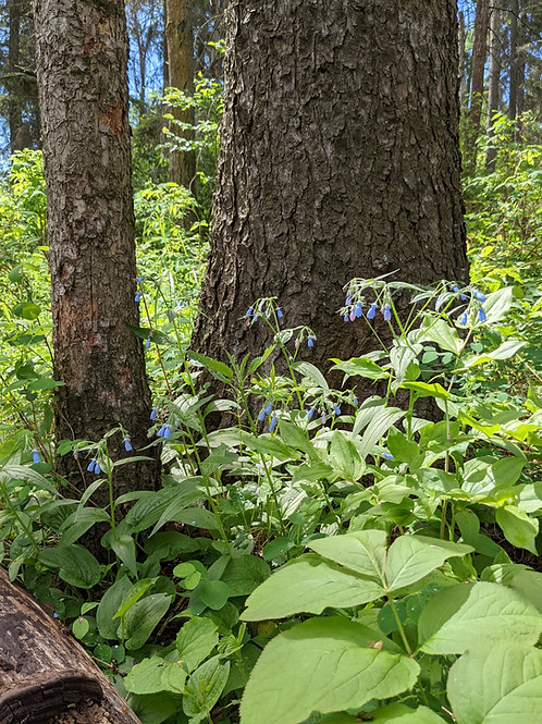 August 26 - Beaver Hills Biodiversity Trail
