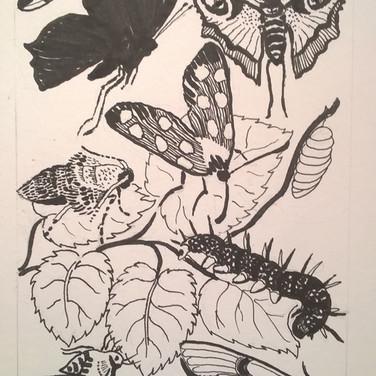 Sarah Longley: 'Moths & Butterflies