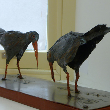 Greg Dobson: 'Oystercatchers'