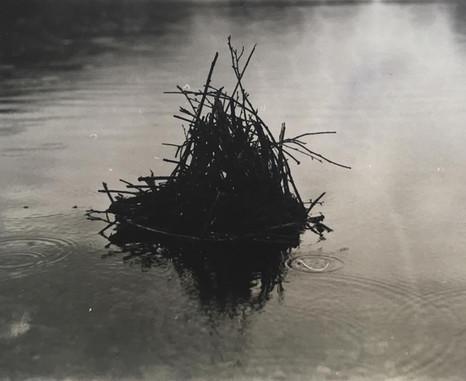 'Cirean dubh'.  (black twigs)