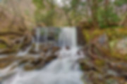 Quehanna Wild Area