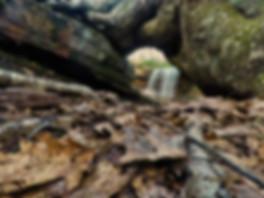 Cole Run Falls root arch