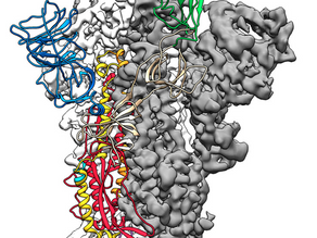 코로나바이러스를 목표로 하는 백신 과학자들