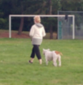 dog walker-2.jpg