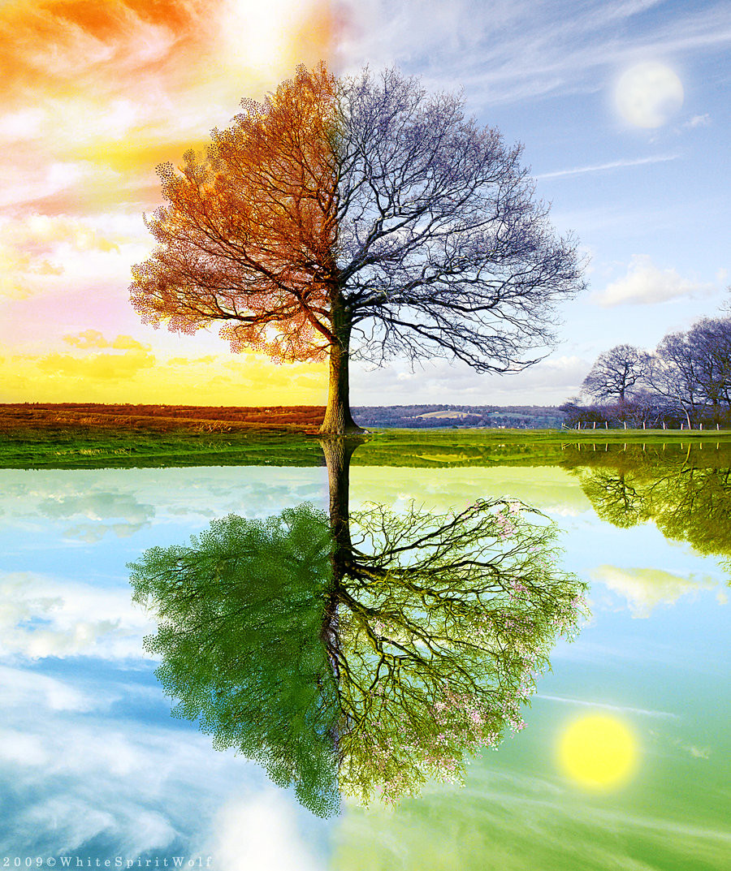 14373-seasons-by-whitespiritwolf.jpg