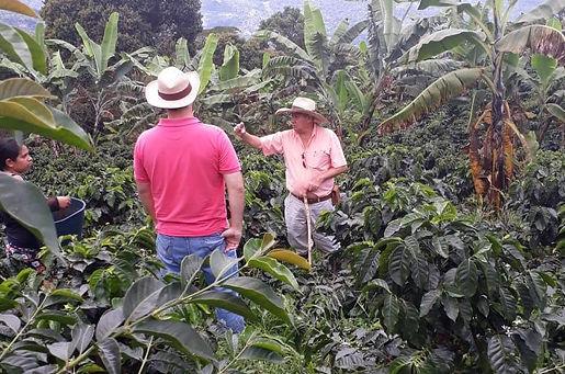 coffee farmers new zeland