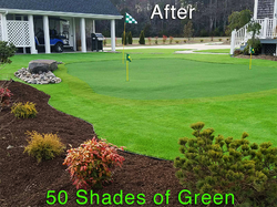 Putting Green, Synthetic Lawn