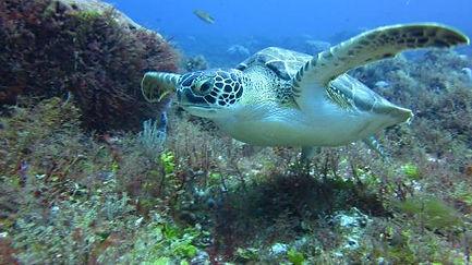 Sea Turtles snorkeling in Cozumel