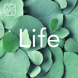 Nature Lifestyle 01.jpg