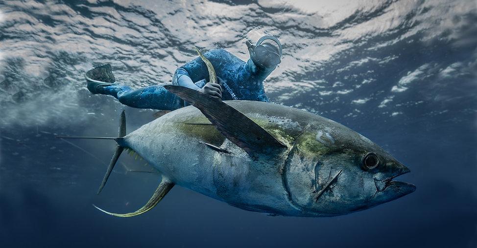 Spearfishing tuna diving