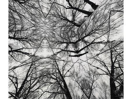 Patricia Brennan - Maquishti Album Review