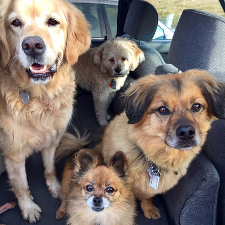 manypawz dogs