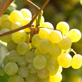 De wijnen van Piemonte - Roero Arneis