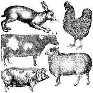 """Zīmogs """"Farm Animals"""""""