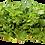 Thumbnail: Revolution Farms OP Lettuce 3 lb bag