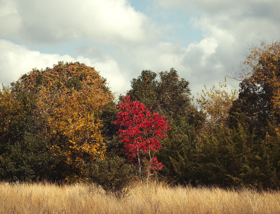 Hill Country Trees